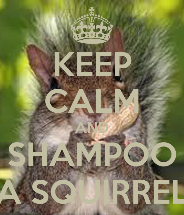 KEEP CALM AND SHAMPOO A SQUIRREL