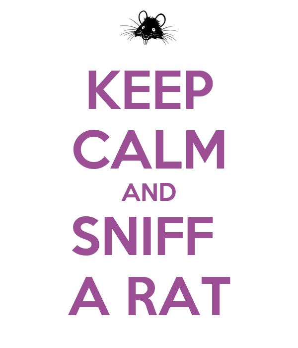 KEEP CALM AND SNIFF  A RAT