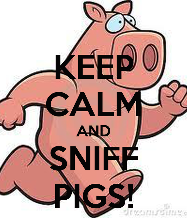 KEEP CALM AND SNIFF PIGS!