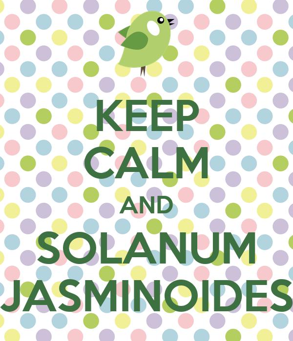 KEEP CALM AND SOLANUM JASMINOIDES