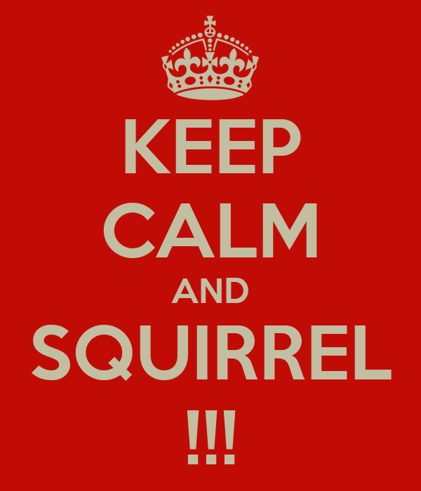 KEEP CALM AND SQUIRREL !!!