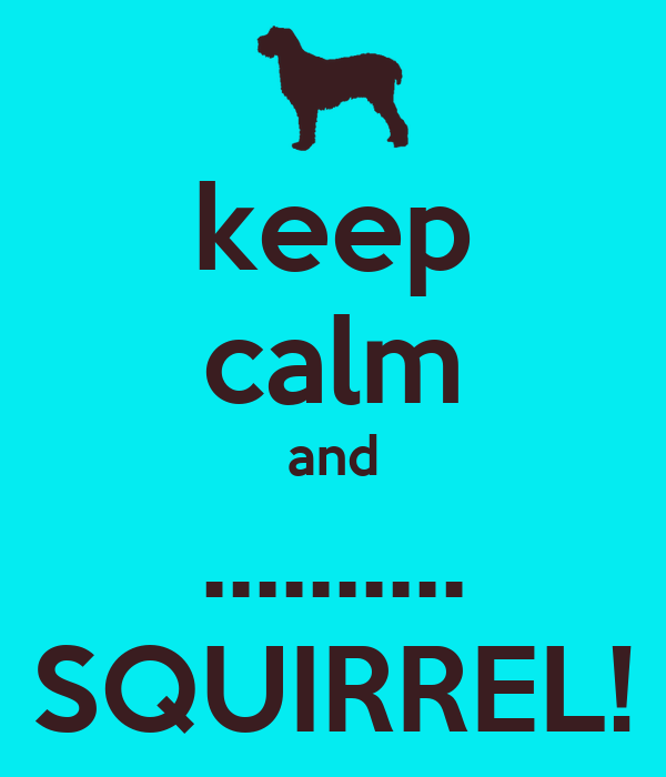 keep calm and .......... SQUIRREL!