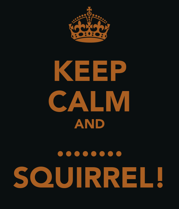 KEEP CALM AND ........ SQUIRREL!