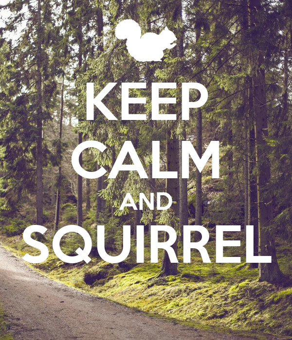 KEEP CALM AND SQUIRREL