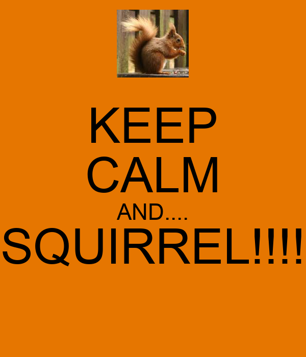 KEEP CALM AND.... SQUIRREL!!!!