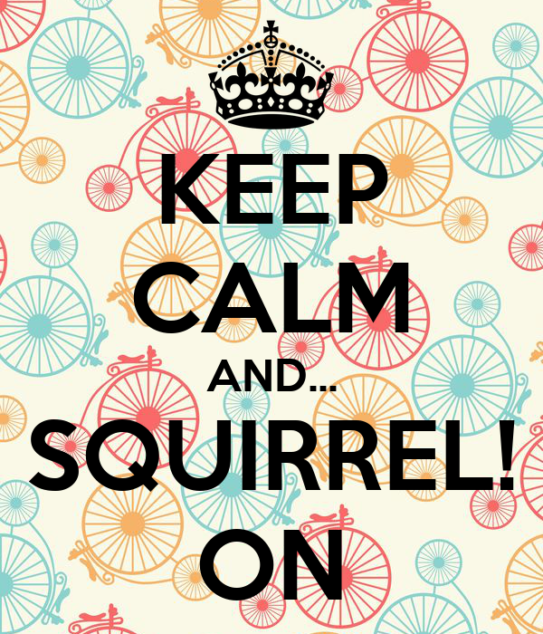 KEEP CALM AND... SQUIRREL! ON