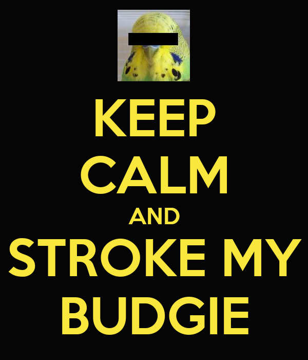 KEEP CALM AND STROKE MY BUDGIE