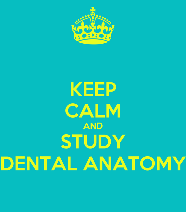 KEEP CALM AND STUDY DENTAL ANATOMY