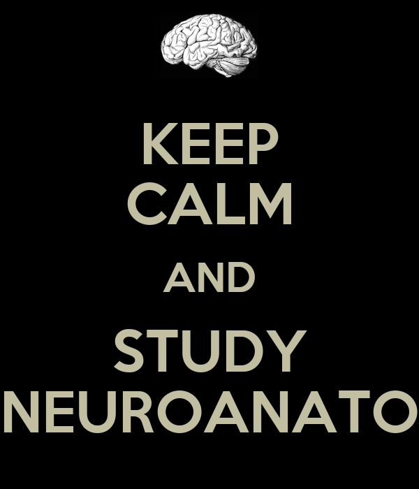 KEEP CALM AND STUDY NEUROANATO