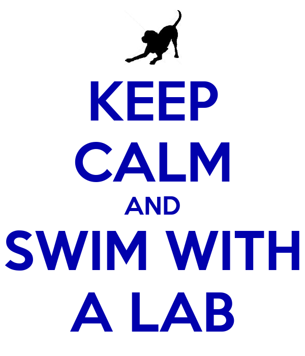 KEEP CALM AND SWIM WITH A LAB