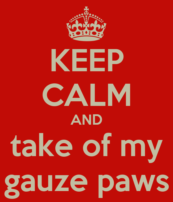 KEEP CALM AND take of my gauze paws