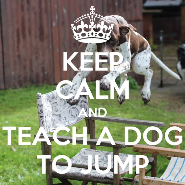 how to teach a dog not to jump