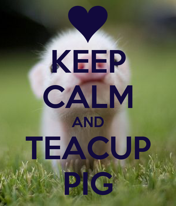 KEEP CALM AND TEACUP PIG