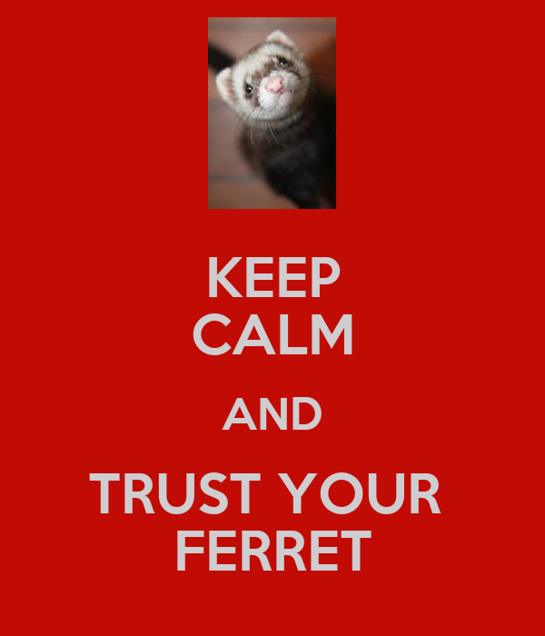 KEEP CALM AND TRUST YOUR  FERRET