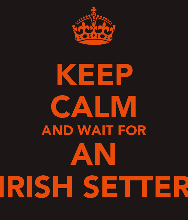 KEEP CALM AND WAIT FOR AN IRISH SETTER