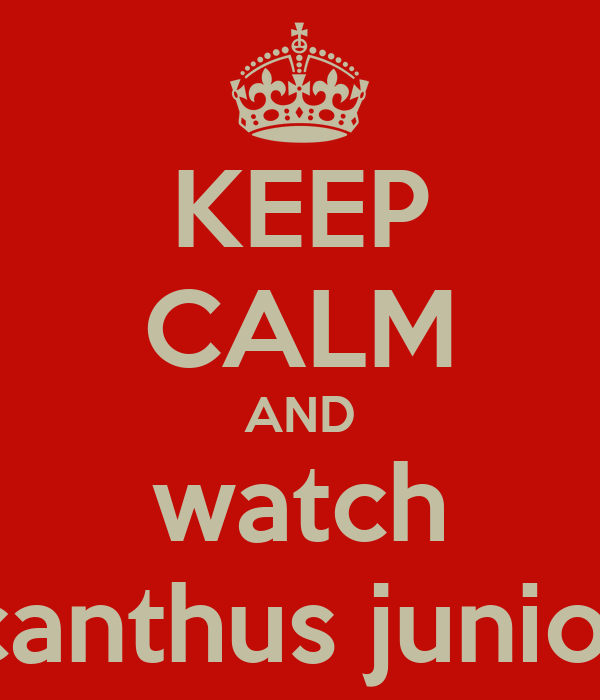 KEEP CALM AND watch acanthus juniors