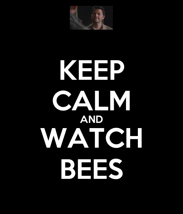 KEEP CALM AND WATCH BEES