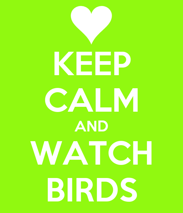KEEP CALM AND WATCH BIRDS