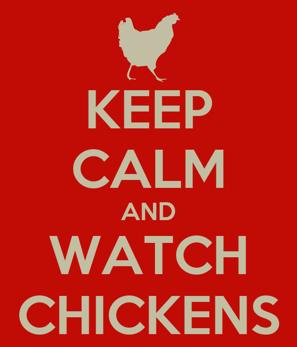 KEEP CALM AND WATCH CHICKENS