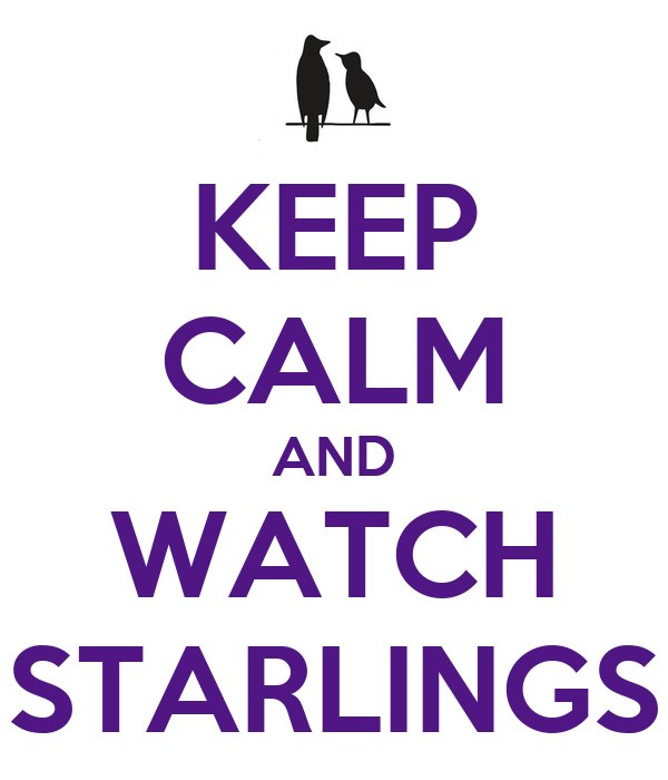 KEEP CALM AND WATCH STARLINGS