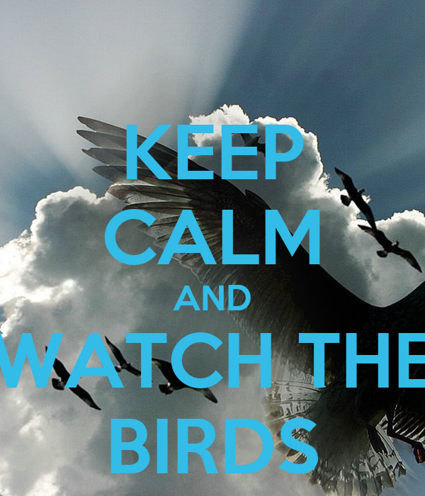 KEEP CALM AND WATCH THE BIRDS