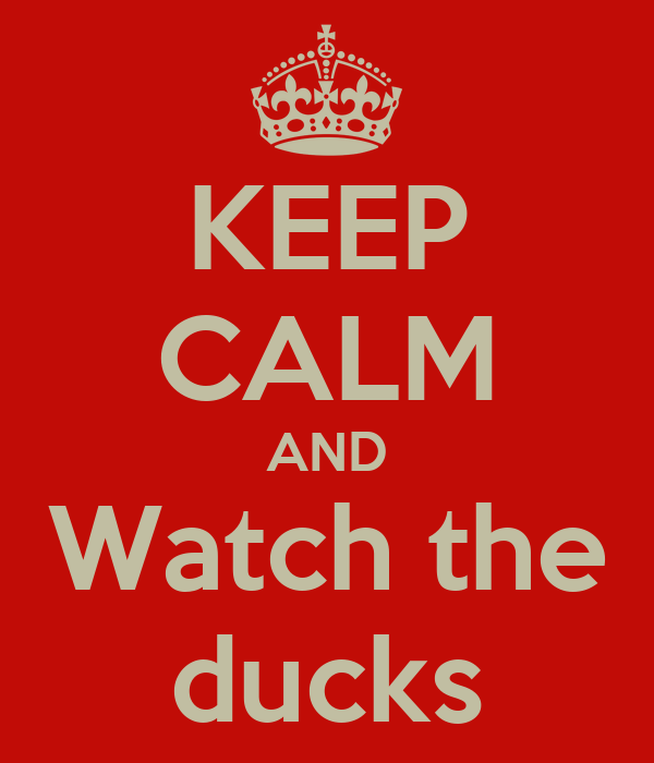 KEEP CALM AND Watch the ducks