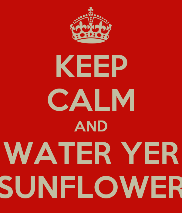 KEEP CALM AND WATER YER SUNFLOWER