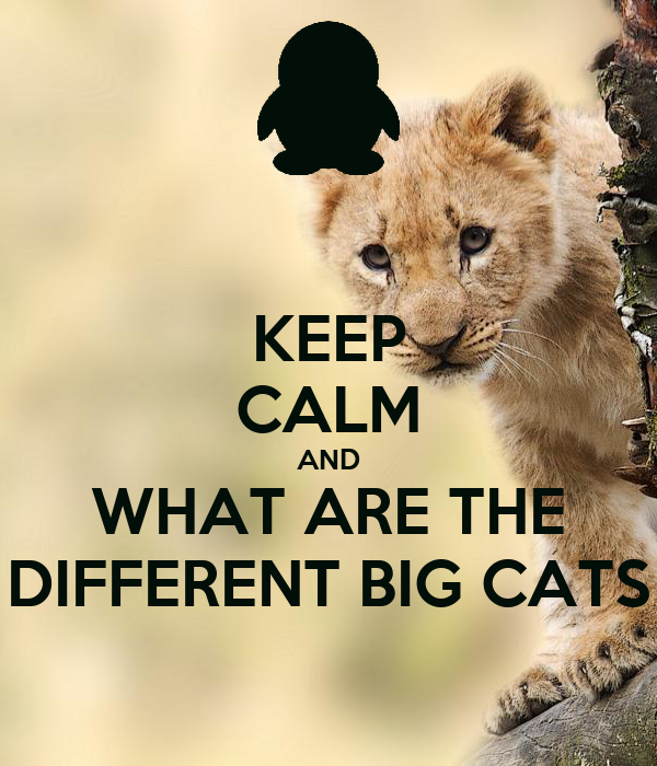 KEEP CALM AND WHAT ARE THE DIFFERENT BIG CATS