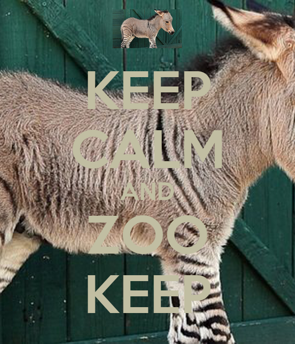 KEEP CALM AND ZOO KEEP