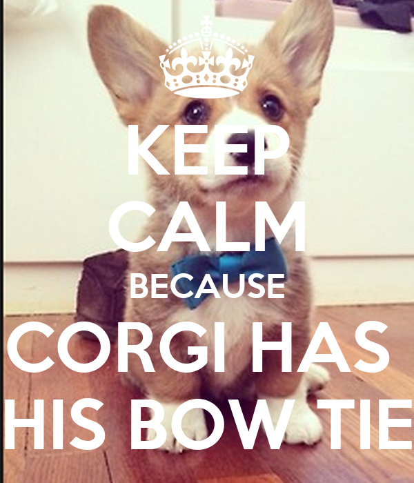 KEEP CALM BECAUSE CORGI HAS  HIS BOW TIE