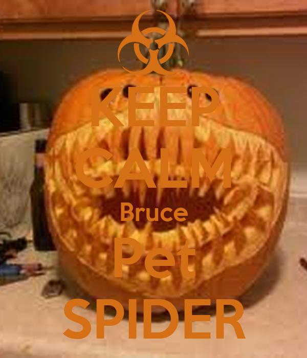 KEEP CALM Bruce Pet SPIDER