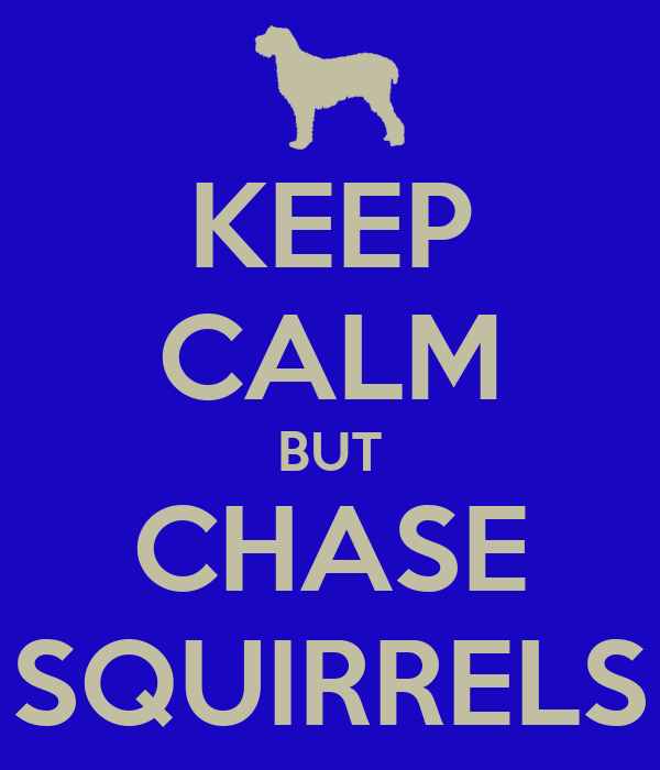 KEEP CALM BUT CHASE SQUIRRELS