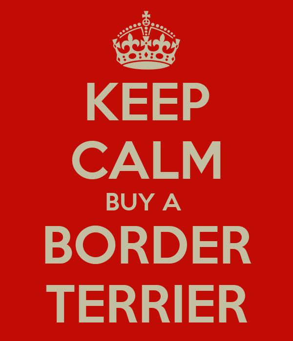 KEEP CALM BUY A  BORDER TERRIER