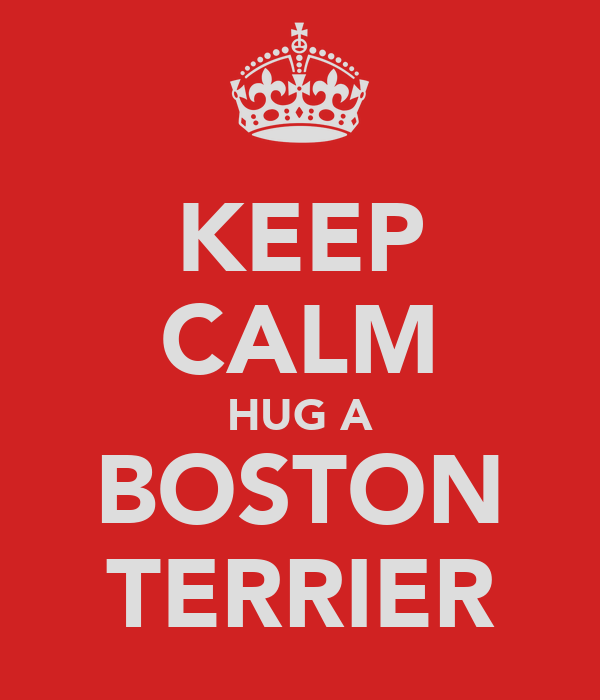 KEEP CALM HUG A BOSTON TERRIER