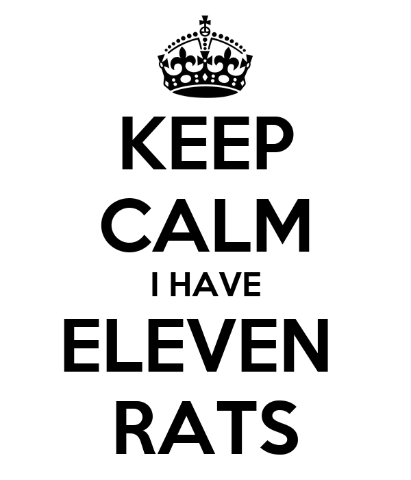 KEEP CALM I HAVE ELEVEN  RATS