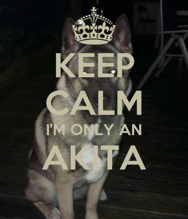 KEEP CALM I'M ONLY AN AKITA