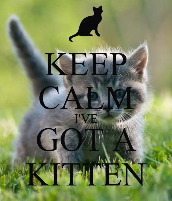 KEEP CALM I'VE GOT A KITTEN
