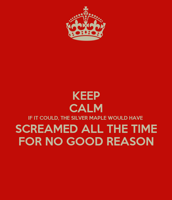 KEEP CALM IF IT COULD, THE SILVER MAPLE WOULD HAVE  SCREAMED ALL THE TIME FOR NO GOOD REASON