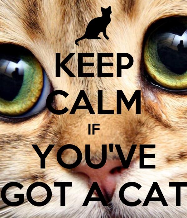 KEEP CALM IF YOU'VE GOT A CAT