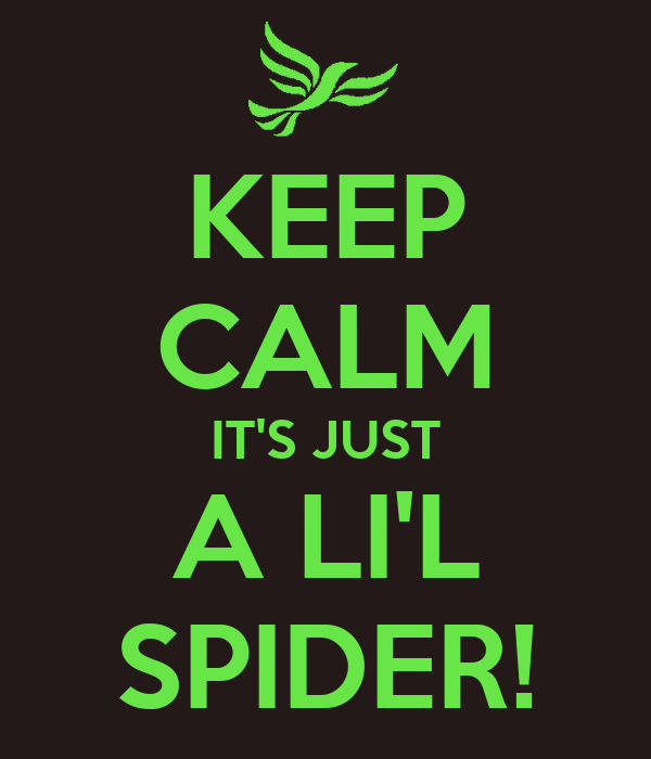 KEEP CALM IT'S JUST A LI'L SPIDER!