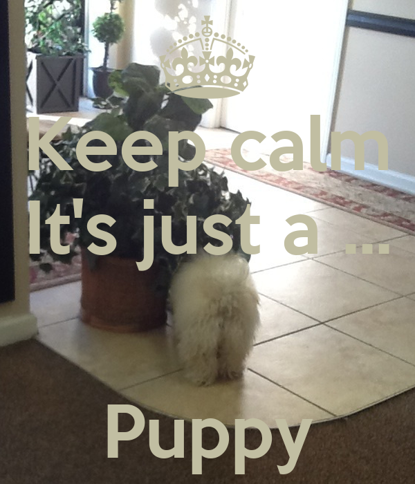 Keep calm It's just a ...   Puppy