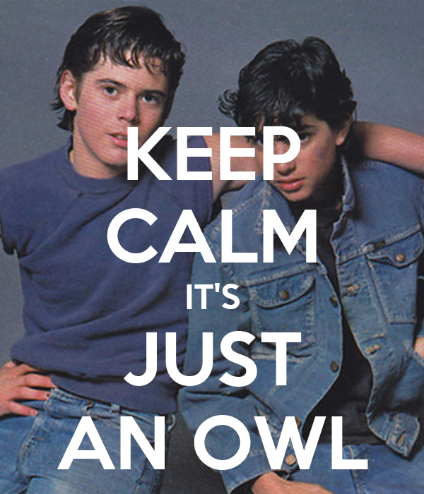 KEEP CALM IT'S JUST AN OWL