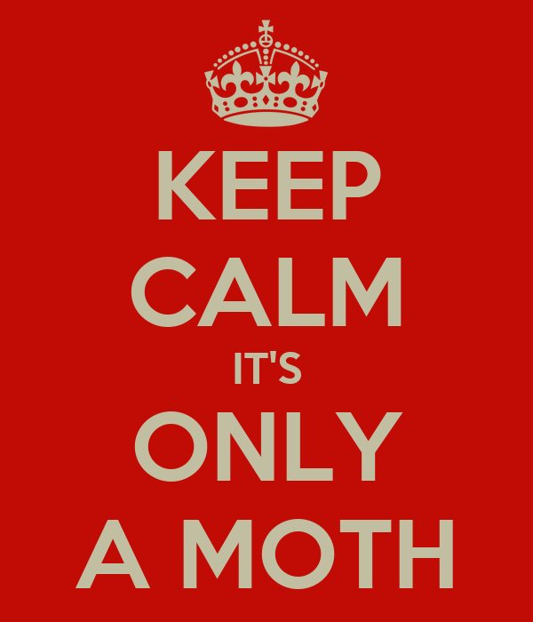KEEP CALM IT'S ONLY A MOTH