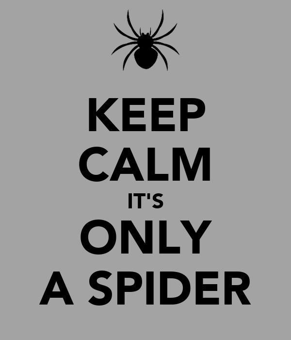 KEEP CALM IT'S ONLY A SPIDER