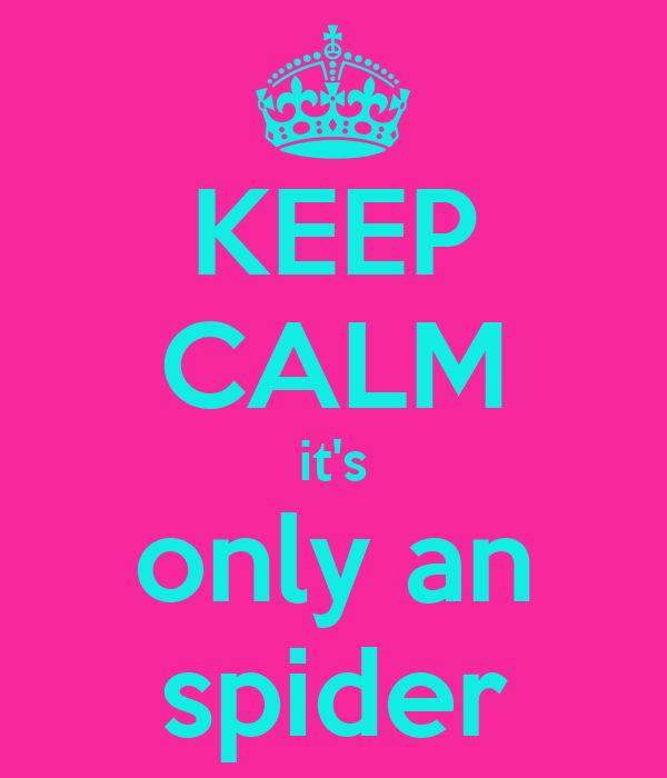 KEEP CALM it's only an spider
