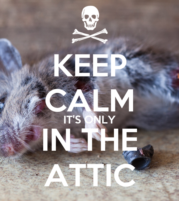 KEEP CALM IT'S ONLY IN THE ATTIC