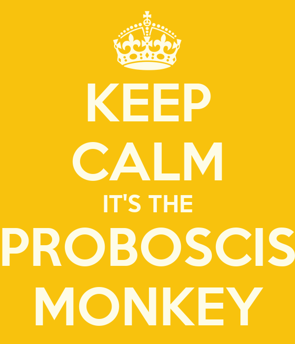 KEEP CALM IT'S THE PROBOSCIS MONKEY