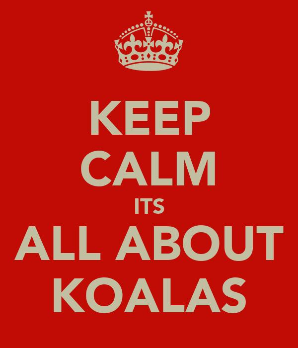 KEEP CALM ITS ALL ABOUT KOALAS