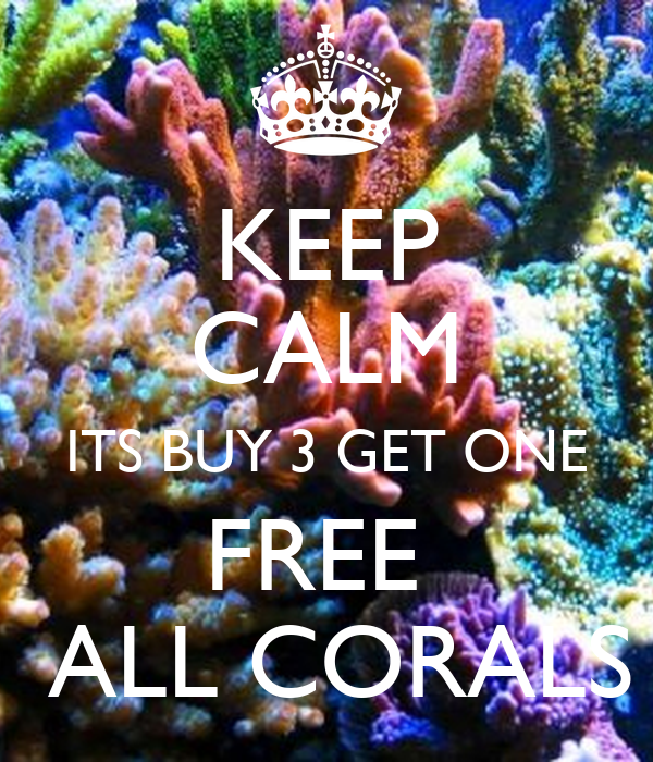 KEEP CALM ITS BUY 3 GET ONE FREE   ALL CORALS