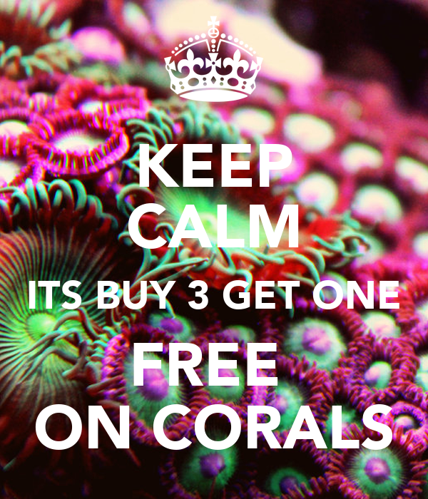 KEEP CALM ITS BUY 3 GET ONE FREE  ON CORALS